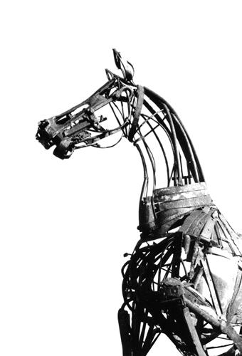 Cheval piaffant © Dumont