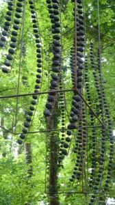 christophe-dumont-art-environnemental